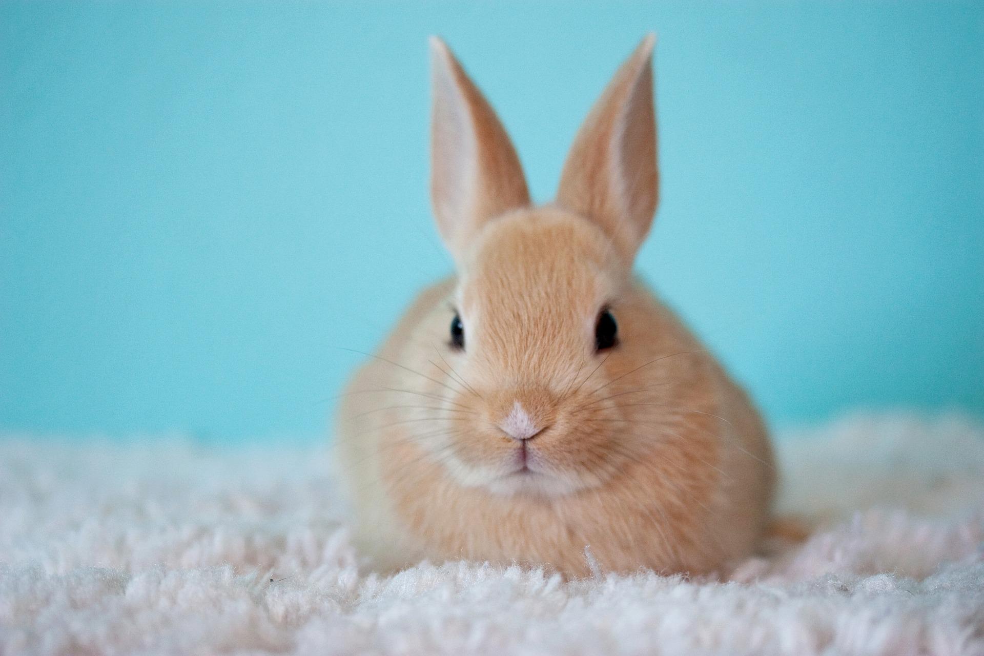 Undernumeroskoper og kaninmetoden